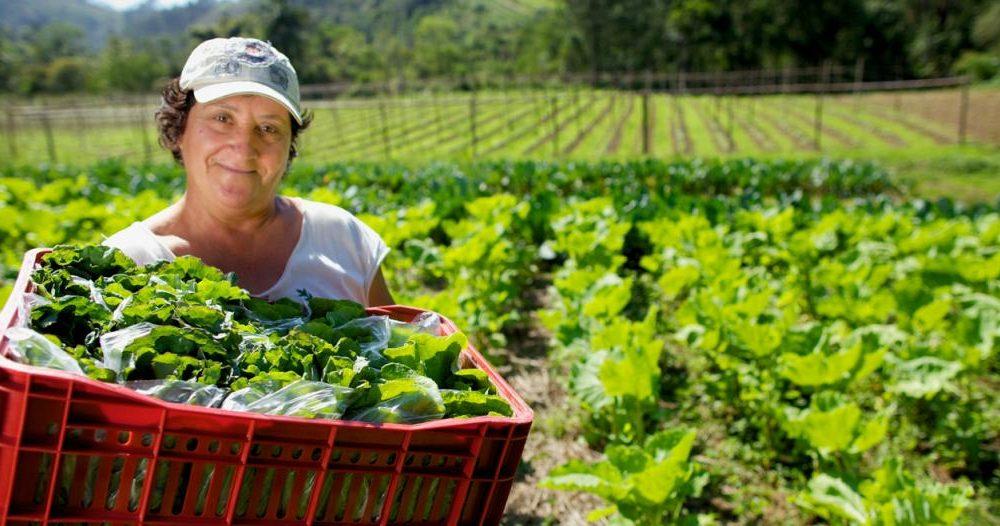 Una feria con alimentos de productores locales a precios muy accesibles llega a Maquinista Savio