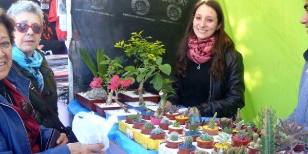 Emprendedores locales – apostando a los cactus y al bonsai