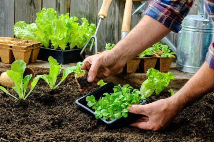 Está abierta la inscripción para los cursos de huerta agroecológica dictados por profesionales de la Facultad de Agronomía