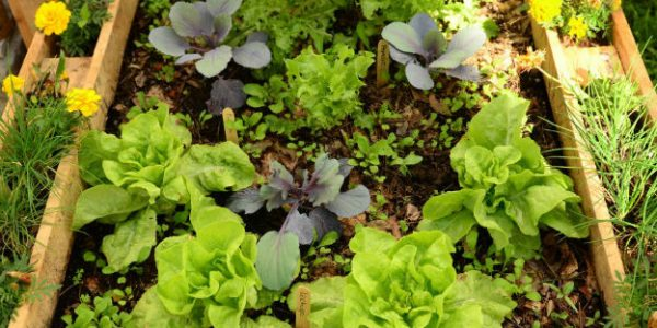 Con récord de inscriptos comenzaron los cursos de extensión para capacitación en Huerta Agroecológica