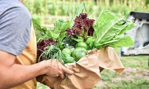 La huerta agroecológica Municipal finalizó su quinta cosecha con 100 kilos de verduras y hortalizas