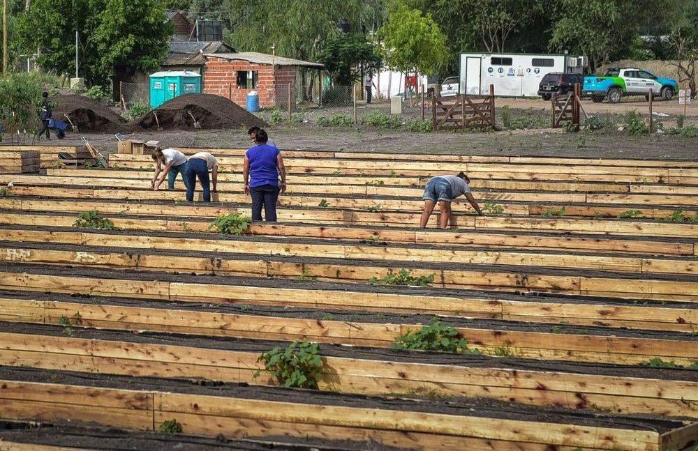 Jornada de siembra y trasplante de plantines en la segunda huerta agroecológica del Partido de Escobar