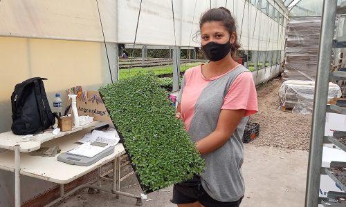 Argenplugs: Una de las plantineras más importantes del país continúa su expansión en Loma Verde